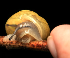 ~ HighSpeed Retreat ~ (ViaMoi) Tags: canada macro eye nature photo spring ottawa shell snail viamoi