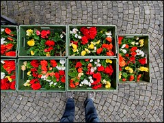 3 8 8 0   /   1 1 (victor*f) Tags: flowers cemetery fisheye cobblestones boxes cobbles crates correctedwithdxoopticspro