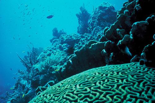 florida coralreef