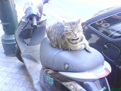 ¡¡¡Gato!!!