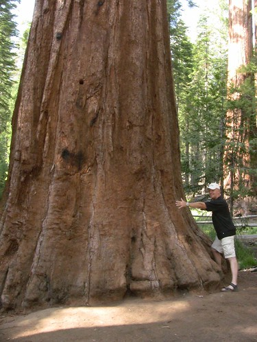 my Dad and the Sequoia