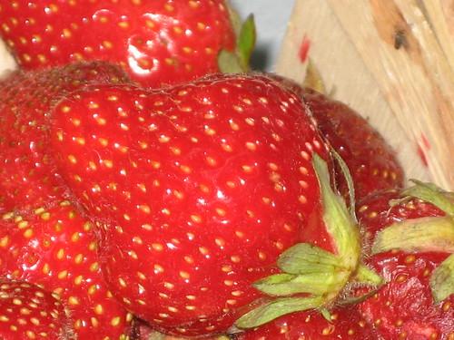 Bardenhagen Berries!
