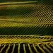 Vines.Slopes - by Chris (archi3d)