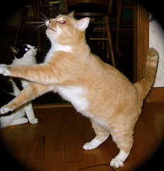 Pinky Performs the Pokey! (Gail S) Tags: cat spooky hokeypokey happyfurryfriday spacecat superbmasterpiece pinkypokey