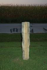 DSC_5880 (JimWalton) Tags: redoak stoneposts