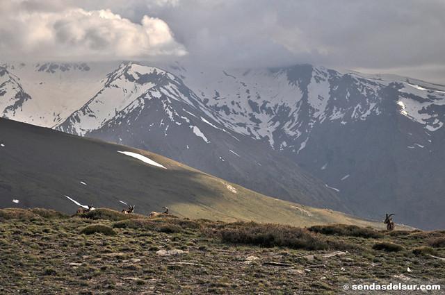 Algo de fauna de Sierra Nevada