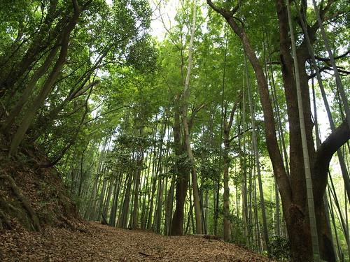 Geocache: Otokoyama Seseragi Trail