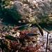 Bahia Honda State Park: Common Fish