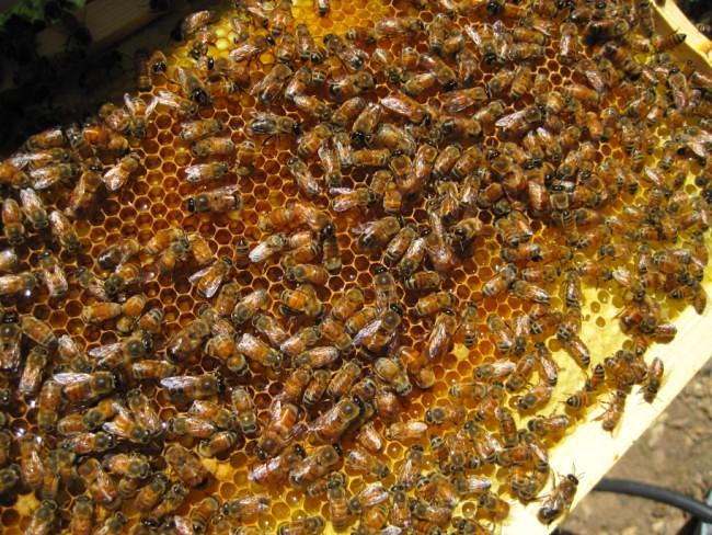 beekeeping 254 (650 x 488)