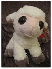 Dreamy Eyes Lamb