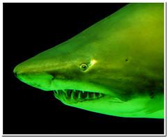 aquarium #10 (R.Duran) Tags: madrid espaa zoo aquarium shark spain nikon espanha europa europe d200 espagne acuario tiburon 18200mmf3556gvr instantfave