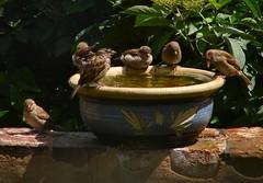 Sparrows....