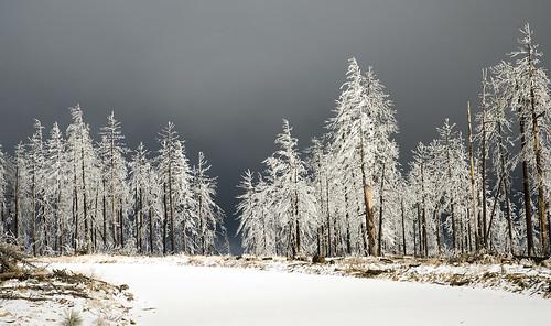 Snowy Mogollon Rim, AZ
