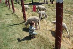 Geoffrey at the Experimental Farm (DNAMichaud) Tags: farm geoffrey experimentalfarm
