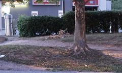 Gas Station Tree, Bush, Erosion At Dusk: Piney Branch Road & University Boulevard (Silver Spring, MD) - by takomabibelot