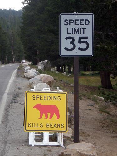 Red Bear Dead Bear