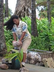 Day8_Maui_SugarPlanataion1 (Amudha Irudayam) Tags: beach hawaii maui sugar plantation amudha cocunut