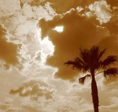 palm tree sky - by kevindooley