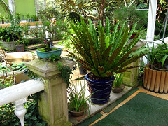 Changgyeonggung Botanical Garden