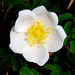 Rose Blyth Photo 4