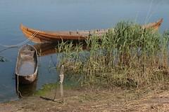 Wikinger Ruderboot Nökkvi und ein Einbaum auf dem Haddebyer Noor in Haithabu WHH 05-06-2010