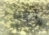 Spring Dream (Jose Luis Mieza Photography) Tags: flowers flores flower fleur fleurs flor fflower benquerencia florews reinante jlmieza belabela reinanteelpintordefuego joseluismieza