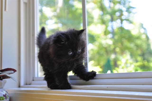 cute black kitten by window