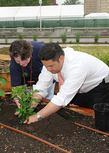 Agriculture Deputy Secretary Kathleen Merrigan assists New Mexico Congressman (3rd District) Ben Ray Luján plant chili peppers at the New Mexico Chile Pepper Fiesta held on Wednesday, June 9, 2010 on the east lawn of the Whitten Building at the USDA People's Garden.