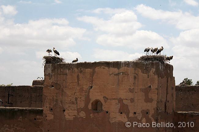 Cigüeñas del Palacio el Badi. © Paco Bellido, 2010