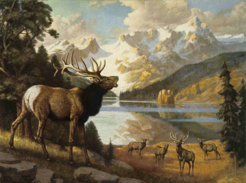 5-2 elk
