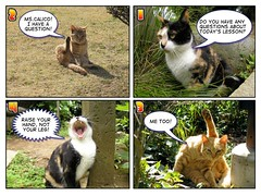 comic 07 (hamapenguin) Tags: animal cat comic comiclife neko  effect straycat    thebiggestgroup abigfave