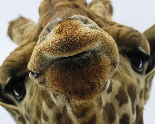 628240677 8974b6fe65 Funniest Animals