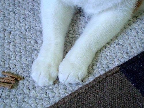 Nikita's paws