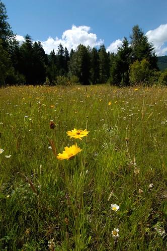 field in Portland