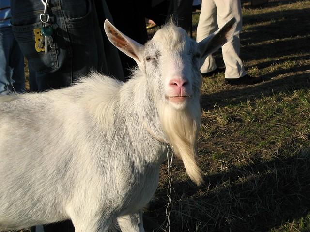 Goatic