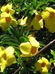 Day9_Maui_GardenOfEden_Hana3 (Amudha Irudayam) Tags: flowers beach garden hawaii maui hana eden amudha