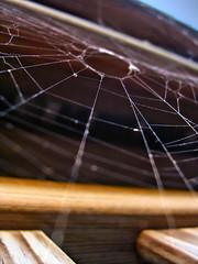 Spiderless Web (RichTatum) Tags: wood blue portrait sky nature contrast bug insect geotagged spider illinois nikon critter web arachnid spiderweb silk insects bugs gazebo creature buggy romeoville nikon3200 blogrodent richtatum lumisGallery:blog=photoblog geo:lat=41620666 geo:lon=88161783
