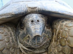 Turtle vagaman tags portrait eye nature beautiful face look