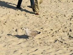 Seagull (el_mex) Tags: sea holland beach water netherlands meer thenetherlands zeeland shore sonne brandung niederlanden dieniederlanden