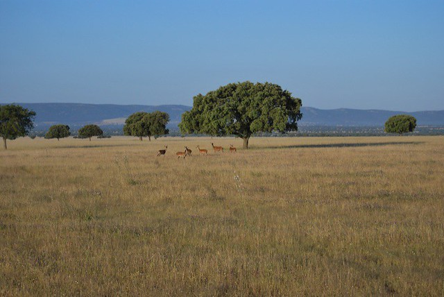 El Serengeti español (La Raña)