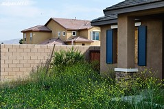 14 (rob_low2003) Tags: california homes abandoned nbc bush war power riverside hilton coke 106 corona fox drugs abc pepsi dope economy zero ralph 2009 obama americas redlands cocaine hookers yucaipa in squatters crises kabc 6343 kttv forecloseres ralph6344