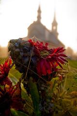 III (Sous l'Oeil de Sylvie) Tags: morning flower church fleur cemet