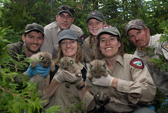 Lynx Project Team (U. S. Fish and Wildlife Service - Northeast Region) Tags: canada me maine conservation habitat lynx usfws claytonlake fishandwildlifeservice canadalynx lynxcanadensis usfishandwildlife lynxkitten greatnorthwoods
