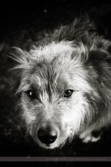Dog, County Clare, Ireland (Seven Seconds Before Sunrise) Tags: travel ireland bw dog puppy europe clare eire burren sooty ballyvaughan burrencollegeofart