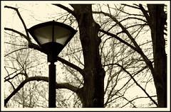 between the lines (plaisirdevivre) Tags: trees lamp monochrome lines alberi rami lampione linee monocromatico