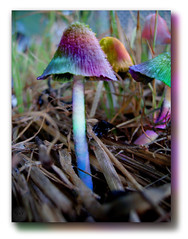 Psychadelic  Mushrooms ~(WPSC #48) (Gravityx9) Tags: photoshop altered word hearts mushrooms chop fabulous multicolored wowie magical mosca bestofflickr specialeffects sfx week48 ishot blogthis smorgasbord ithink allyouneedislove 0707 americaamerica creativephoto psart wpsc goldseal wowiekazowie 070307 artisticphotosworld citrit extraordinarycompositions clackamore colourartaward proudshopper photosthatrock wpcgallery yourpreferredpicture highcreativity clevercreativecaptures totalphotoshop allkindsofbeauty extremest photographersgonewild sensationalcreations ruthscontests