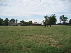 No zoom grass (spader) Tags: horses cypress threechimneys sd600