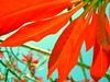 hojas.rojas.
