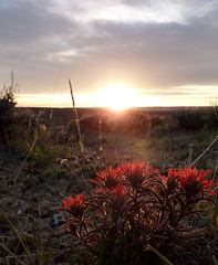 Red Dusk 11 (carfull...Cowboy State-r) Tags: sunset desert wildflowers wyoming sweetwater indianpaintbrush supershot tripleniceshot mygearandmepremium mygearandmebronze mygearandmesilver mygearandmegold mygearandmeplatinum mygearandmediamond