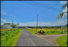 DESA BEDADUNG (Arigo Muda (DAOP 09 JR)) Tags: beautiful village path awesome cc pulling ka 87 timur mutiara a banyuwangi so 20118r eastbounding